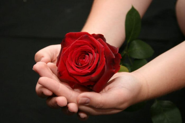 Берегите розы от стрессов